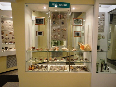 General view of the gastropod exhibition