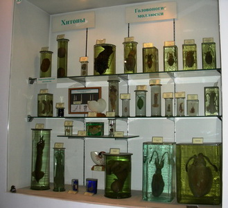 A part of the chiton's, solenogaster's and cephalopod exhibition